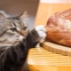 Is it possible to feed a cat with raw meat and what are the limitations?