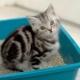 Cat litter: varieties and subtleties of use