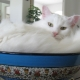 Overview of white cats of the Turkish Angora breed
