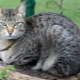 Coloring, maintenance and feeding of purebred cats and cats