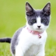 Collars for cats: types, choices and features of use