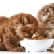 Features and rating of super-premium feed for kittens