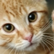 Why do cats trample us?
