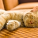 Duration and sleep patterns of the cat