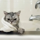 Cat shampoo: how to choose and use it?