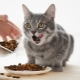How many times a day is it necessary to feed a cat and what does it depend on?