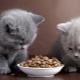 Premium dry feed for kittens