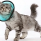 Cat collar: features, selection, production and use