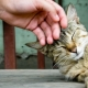 All about raising and re-education of cats