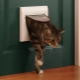 Choosing a door to the toilet for the cat