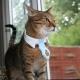 Choosing a pheromone collar for cats