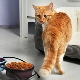 Choosing dry food for older cats