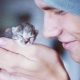 Homeless kittens: is it possible to take them to the apartment and how to domesticate?