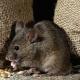 Pelko hiiristä: kuvaus taudista ja vapautumismenetelmistä