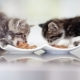 What and how to feed a kitten?