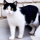 Black and white cats: behavior and common breeds