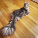 What is a cat tail for?