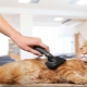 Grooming cats: features of the procedure