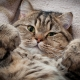 Interesting facts about cats and cats