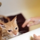 How often can cats be washed and what does it depend on?