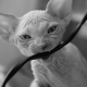 How can a cat wean a wire bite?