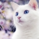 How to call a cat and a white cat?