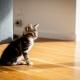 كيفية تعليم القط إلى منزل جديد؟