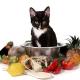 How to choose vegetarian and vegan cat food?