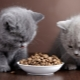 When and how can you give dry food to a kitten?