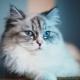 Super premium feed for sterilized cats