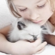 Cats for children: a review of the best breeds