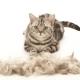 يلقي Cat بشدة: الأسباب والحلول