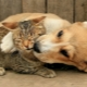 Who is smarter: cats or dogs?