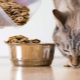 Is it possible to give cats dog food?