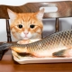 Is it possible to feed cats with fish and what are the limitations?