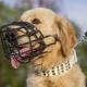 Szükség van-e a labradornak pofára, és hogyan kell azt választani?
