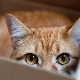 Why do cats love boxes and packages?