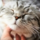Why do cats purr and how do they do it?