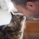 Do cats understand human speech and how is it expressed?