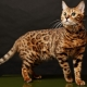 The most beautiful cats: the best breeds
