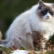 Gray-white cats: a description of the appearance and behavior