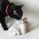 Dry shampoo for cats: how to choose and use it?