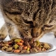 Is dry cat food harmful or not?