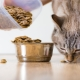 All about dry food for cats and cats