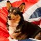English dog names: best options
