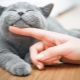 How to care for a kitten and an adult cat?