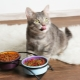 Food for cats and cats: types, manufacturers rating and selection rules