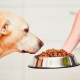 Holistic-class dog food: composition, types and selection criteria
