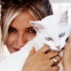 Cats and their owners: Do cats love their owners and can they forget them?