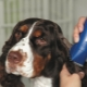 Dog grooming machines: varieties, selection and application